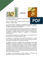 La Ibogaina Por Dr. Lopez