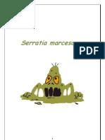 Serratia marcescens