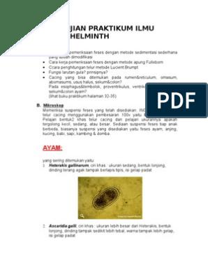 hpv virus and vaccine condiloamele și papiloamele cauzează apariția