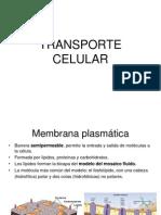 TRANSPORTE CELULAR 1