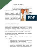 Lesiones de Tendon Rotuliano