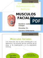 Universidad Adventista de Bolivia-Musculos Faciales
