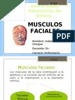 Universidad Adventista de Bolivia-Musculos Faciales