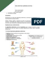 31_Glândulas endócrinas e exocrinas