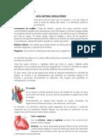 GUÍA SISTEMA CIRCULATORIO 5º Basico