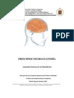 pricipio neuronomia