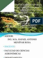 Uso de Los Pimplinae (02052012)
