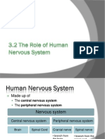 3 2 Role of Human Nervous System 2