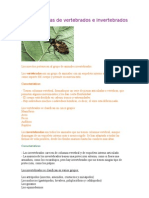 Características de vertebrados e invertebrados