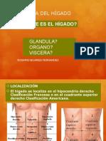anatomiadelhigado-101030094813-phpapp02