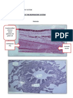 Practical Histology -Respiratory System