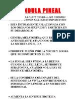 GLANDULAS Y HORMONAS 2012 2ª ENTREGA