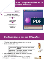 Rutas Metabolicas en Diabetes