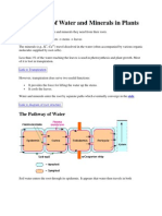 Transport of Water and Minerals in Plants