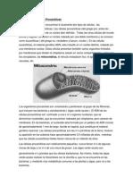 Células Eucarióticas y Procarióticas