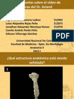 Anatomia - Tronco - Preguntas