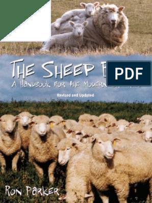 The Sheep Book | Sheep | Shepherd