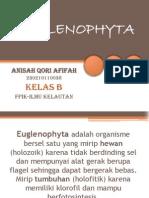 Euglenophyta Ppt