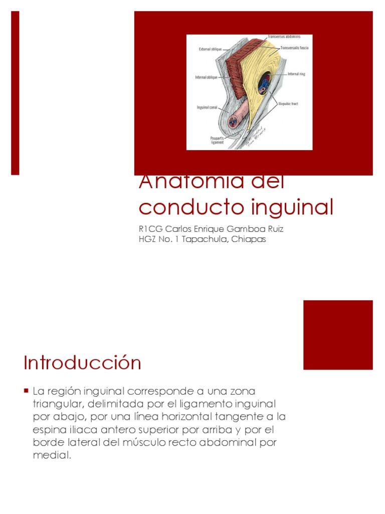 Conducto Inguinal ANATOMIA