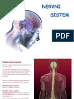 Nervni-sistem