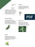 Recetario de Plantas Medic in Ales