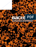 Portfolio Bactéria