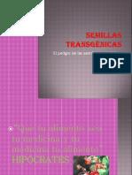 Semillas transgénicas