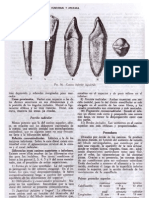 Figun Garino Premolares y Molares