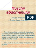 Muşchii  abdomenului