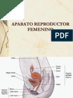 APARATO REPRODUCTOR FEMENINO[1]