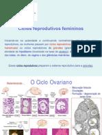 Slides Ciclos Reprodutivos