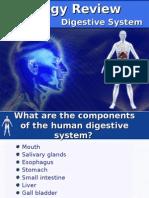 3.3 Digestive System