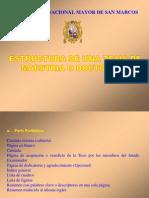 EstructuraInformeDeInvestigacionIngDeMinas5to