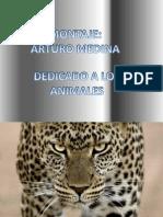 Presentación1ANIMALES