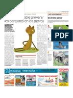 Es indispensable prevenir los parásitos en los perros