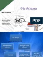 Anatomia via Motora