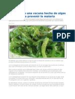 Vacuna Hecha de Algas Para Prevenir La Malaria