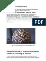 Cultivo de Setas Pleurotus