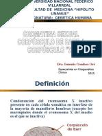 3. Cromatina Sexual