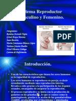 sistemareproductormasculinoyfemenino2009-120129151259-phpapp02