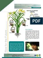 Rice for the Future (Super Jasmine Rice)