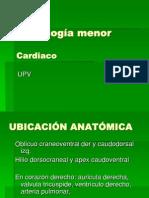 Clase imagen 8 Cardiaco