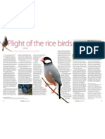 RT Vol. 11, No. 1 Plight of the rice birds