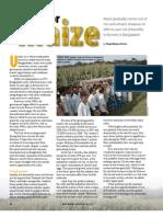 RT Vol. 10, No. 4 A craze for maize