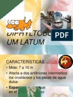 Diphyltobothrium latum