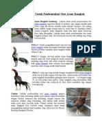Latihan Dasar Untuk Pembentukan Otot Ayam Bangkok