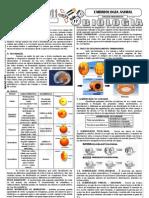 Aula17 Embriologia Animal