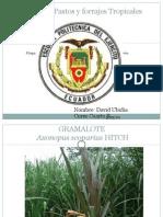 Álbum de Pastos y forrajes Tropicales DAVID UBIDIA