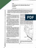 Gonzalez &Hogsas 1999 Plumages of Xenospingus