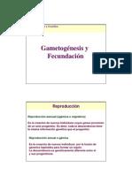 Clase_gametogenesis
